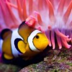 Largest Saltwater Yellowfish in Captivity Is Dead