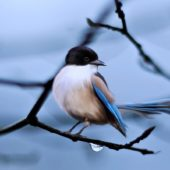 Everything You Ever Wanted To Know About Birds